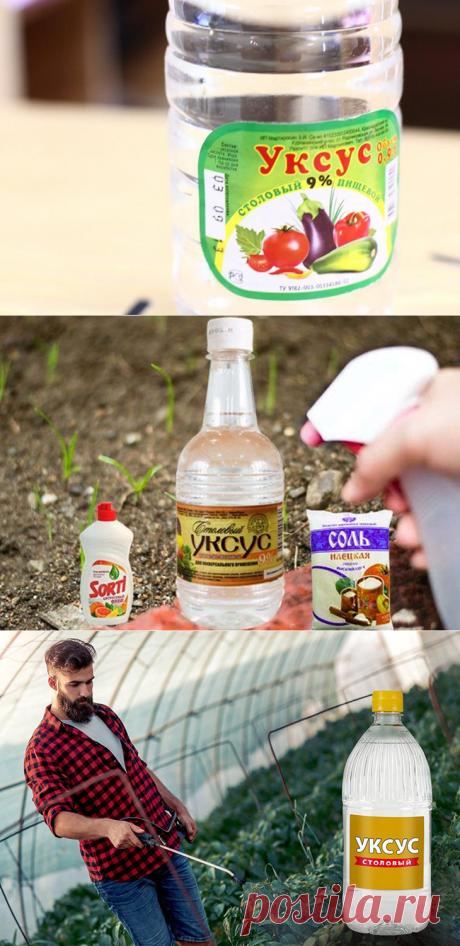 Способы эффективного использования уксуса в огороде