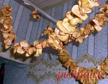 Как сушить яблоки на зиму и не испортить сухофрукты при хранении | Дача - впрок