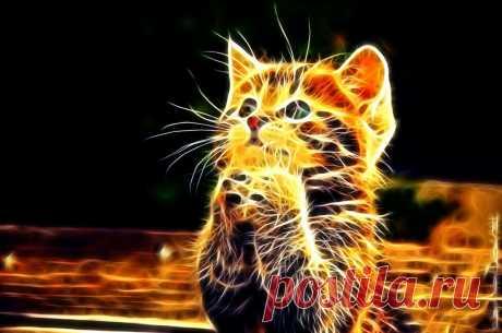 ЦВЕТ ВАШЕЙ КОШКИ МОЖЕТ ИЗМЕНИТЬ СУДЬБУ..  Кошка — одно из самых магических животных на земле.  Не для кого ни секрет, что кошки и котята бывают самых разнообразных окрасок.  Но многие не знают, что цвет кошки несет сильное влияние на человек…