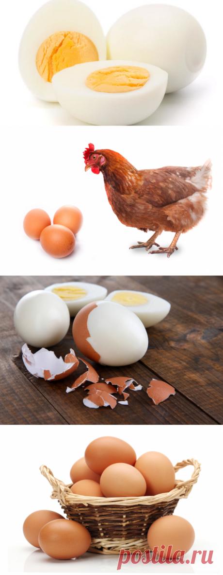 Можно ли подделать куриное яйцо? | Еда и кулинария