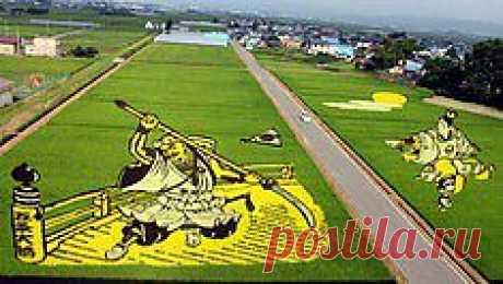 картины на рисовых полях япония
