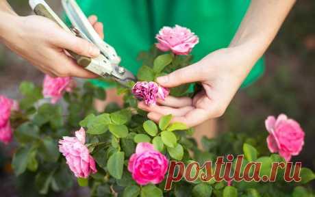 Готовим розы к зиме – 13 полезных советов для начинающих цветоводов    Хорошая зимовка растений – залог прекрасного сада в будущем сезоне. Роза больше всех нуждается в комфортных условиях зимнего сна. Рассказываем, как укрыть розовые кусты правильно.  Конечно же, самы…