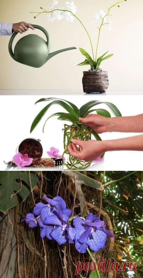 Вянут и сохнут листья у орхидеи: что делать и как помочь растению | Тысяча и одна идея