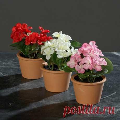 Популярные растения для озеленения и украшения детской комнаты