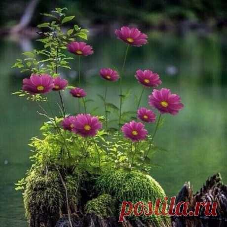 Просто жить... Ничего не загадывать. Не дрожать в ожидании. Просто жить... И себя не обманывать. Будет ровным дыхание. Просто жить... Все желанья исполнятся по велению случая. Просто жить... И пусть в жизни запомнится только самое лучшее!