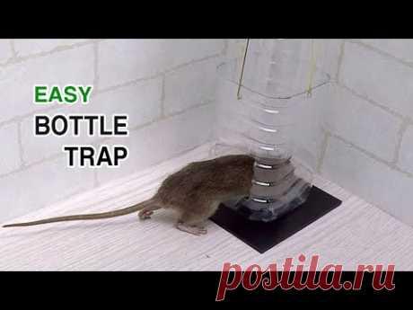 bottle rat/mouse trap
