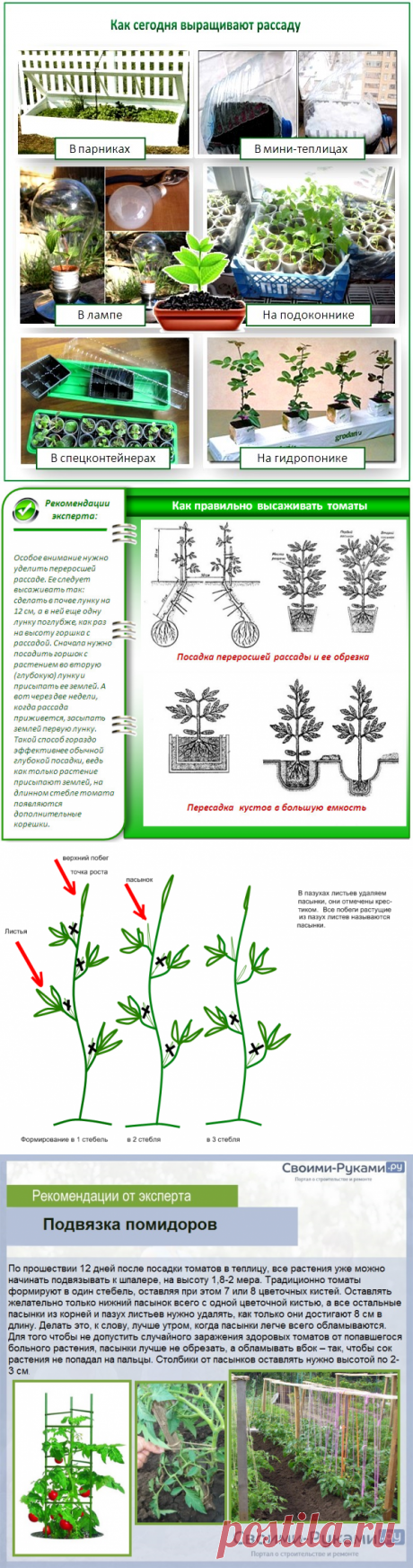 Помидоры: ранние низкорослые сорта для открытого грунта - подробное описание + агротехнология!
