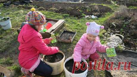 Огород в контейнерах: растим овощи в старых ведрах и тазах - Садоводка