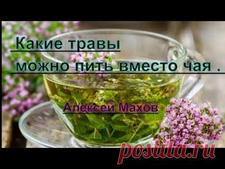 Чай и травы. Какие травы можно пить вместо чая . Алексей Махов - YouTube