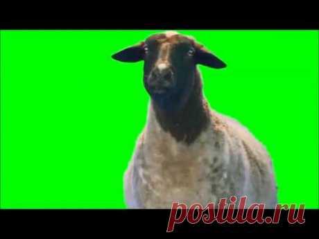 Сборник футажей животных на зеленом фоне