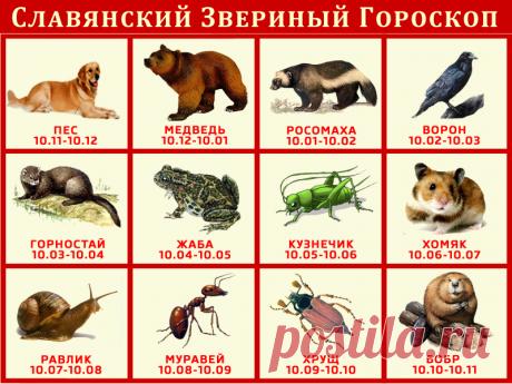 СЛАВЯНСКИЙ ЗВЕРИНЫЙ ГОРОСКОП.