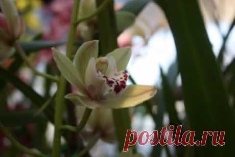 Рассадка орхидей - Садоводка