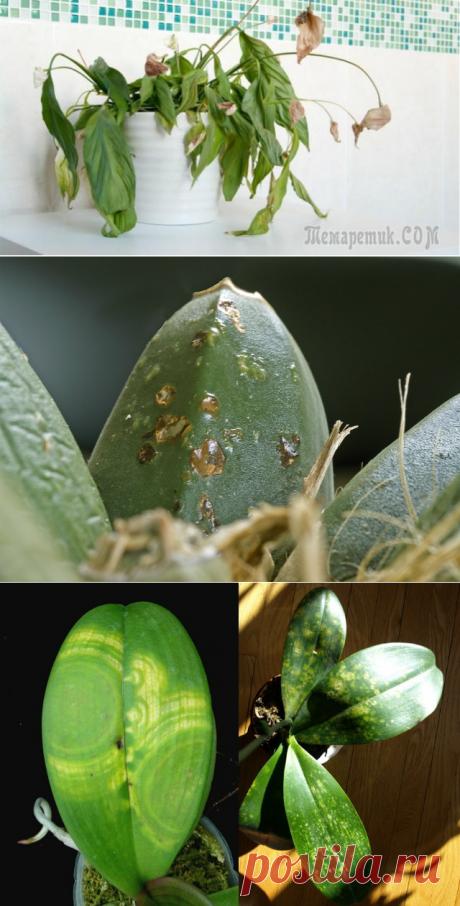 Заболевания комнатных растений: классификация, профилактика и методы борьбы