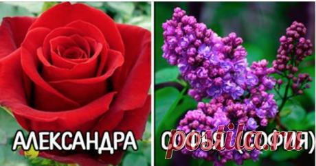 Цветок вашего имени: скорее узнайте, какой цветок соответствует вам
