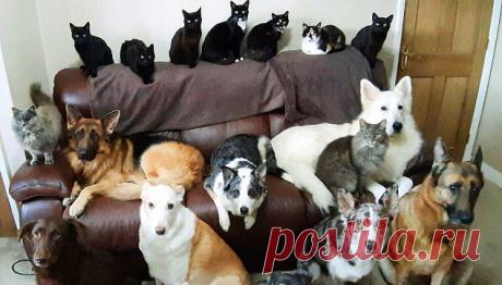 Домашние животные смиренно позировали перед объективом фотокамеры