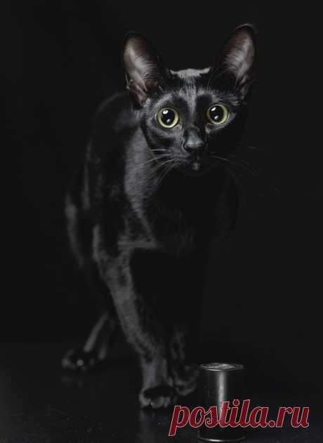Картинки с черной кошкой (35 фото) ⭐ Забавник