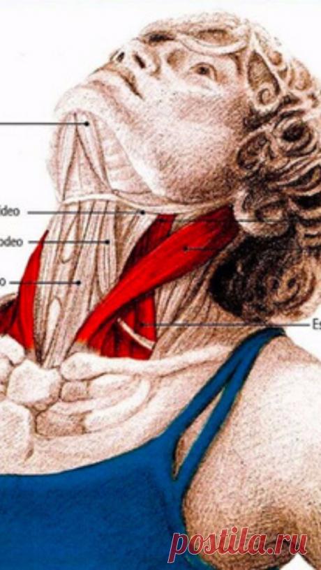 5 упражнений для шеи: Нормализуют давление и освобождают от зажимов - Советы и Рецепты
