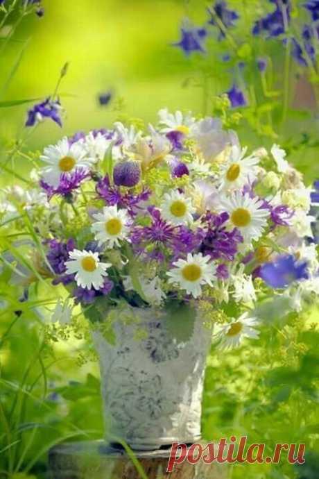 Застенчивые, скромные, родные, Сокрытые от праздных глаз цветы - Лесные, полевые, луговые, Не любящие глупой суеты, Растущие в бору и редколесье, Схороненные в зарослях травы, Не ждущие ни похвалы, ни лести, На солнечной земле цветете вы. Умытые ночной росой ромашки, Лимонный донник, стройный иван-чай,