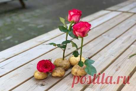 Не поверите, что произойдет через неделю после того, как вы воткнете розовый стебель в картофель! Это удивительно! Красивый букет на кухне поднимет настроение даже в самый хмурый день, согласны? Правда, цветы стоят дорого, особенно если учесть...
