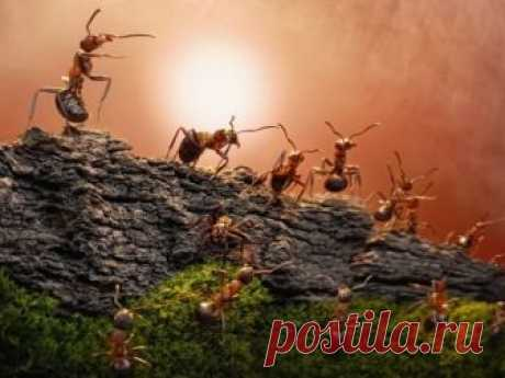 5 способов быстро избавиться от муравьёв на участке