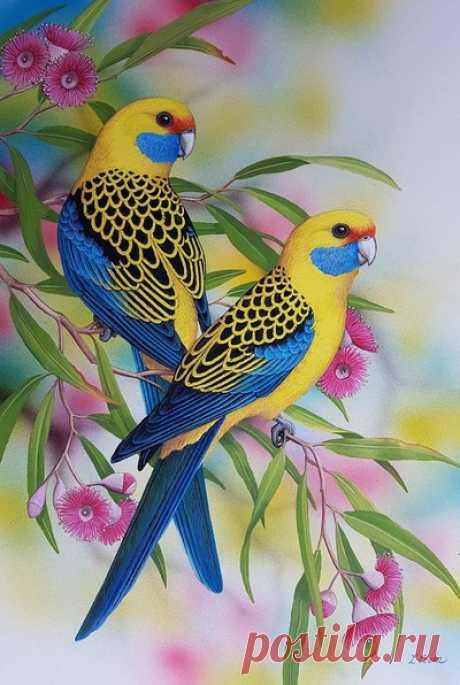 Попугаи — сбор пазла — Пазлы онлайн
