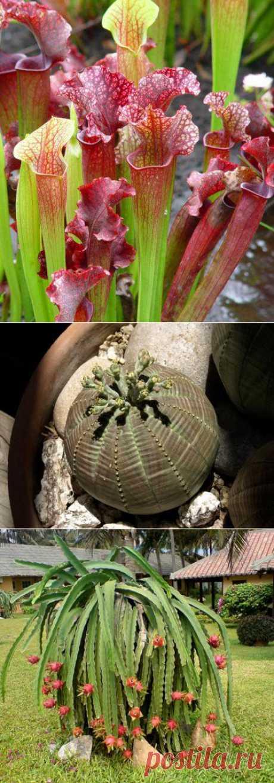 10 странных, непохожих на земные, растений..
