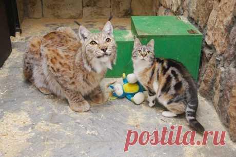 Рысь Линда и кошка Дуся — Путешествия
