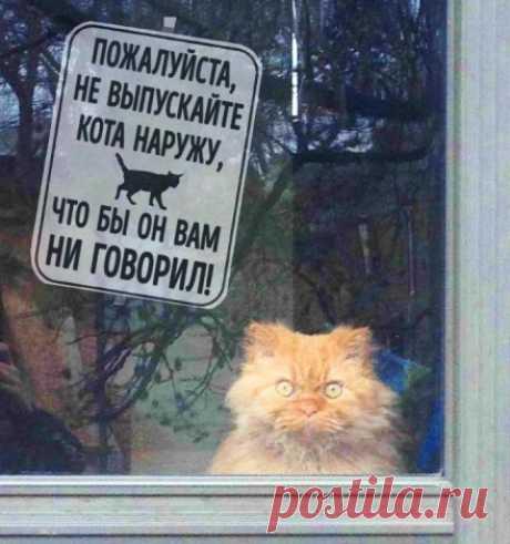 Как кошка Маша пошла на мировую с хозяевами. Подавитесь, дескать… не надо запирать...