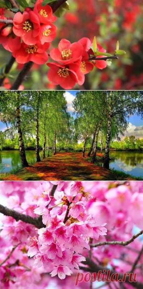 Обои на рабочий стол «Весна!» | Мир клипарта