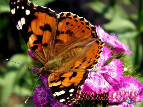 Красота в цветке