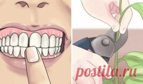 Забудь о проблемах с зубами! Эти 8 растений сделают твою улыбку неотразимой (ФОТО)