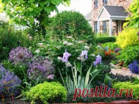Какие кустарники, влаголюбивые растения, деревья можно посадить в низине сада