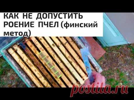КАК НЕ ДОПУСТИТЬ РОЕНИЕ ПЧЁЛ-ФИНСКИЙ МЕТОД