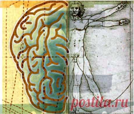 Все болезни делятся по зонам тела...  • 1. Болезни и беспокойства, находящие в основании копчика - позвоночник, ноги, ступни, в целом все кости, связки и хрящи. А также прямая и толстая кишки.  Если Человек теряет хорошую связь с Землей …