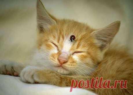 ☺ Кошки | Записи в рубрике ☺ Кошки | Дневник взрослой Дюймовочки