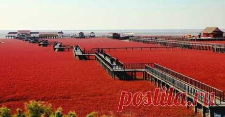 Красный пляж Паньцзинь — Путешествия