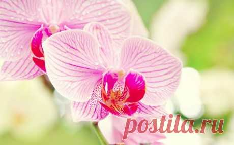 Как правильно ухаживать за орхидеей круглый год, чтобы она цвела