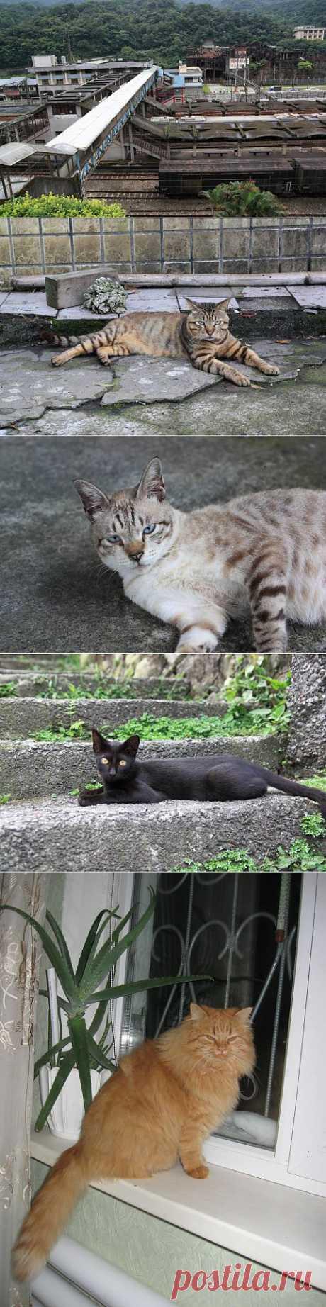 (+1) тема - Как кошки Хоутонг спасли | Непутевые заметки