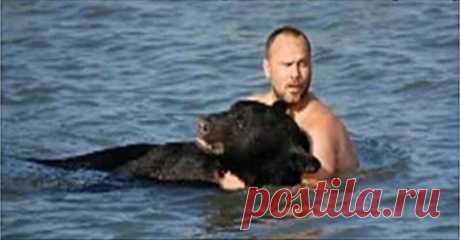 Мужчина увидел, что в воде тонет дикий медведь… - Все самое интересное! Хищное животное — не самый лучший вариант для совместного купания. Кто решился...