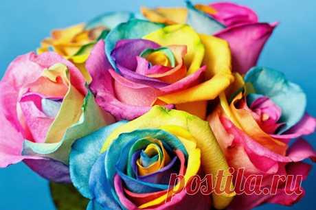Как превратить белую розу в радужную
