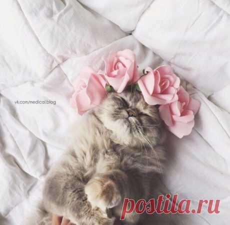 Елена Казанцева
