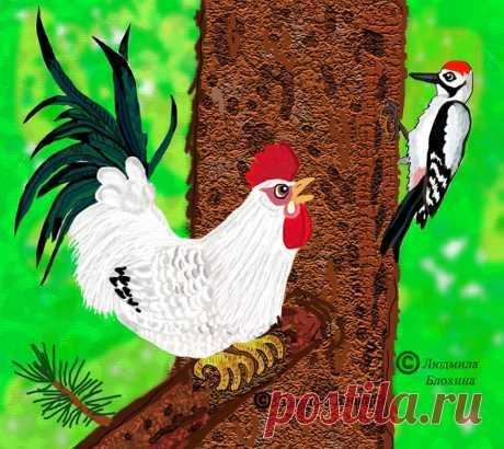 Белый петушок - красный гребешок