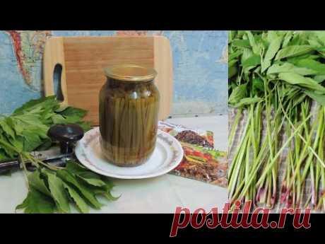 СНЫТЬ 🌿 МАРИНОВАННАЯ. Деликатес: на 🎅🎄 зиму. Готовим  👩🍳 из дикоросов. (Aegopodium podagraria).