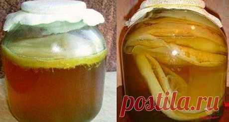 Как самому вырастить чайный гриб - Вкусные рецепты