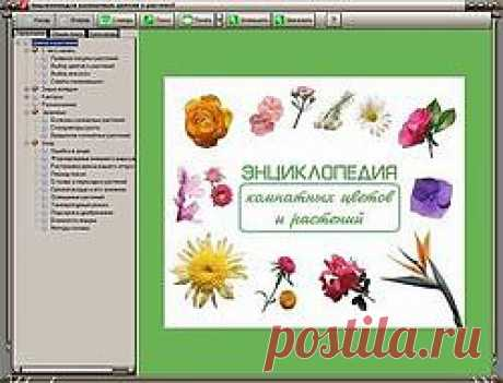 Скачать бесплатно энциклопедию комнатных растений и другие книги  Ссылки на скачивание внизу страницы