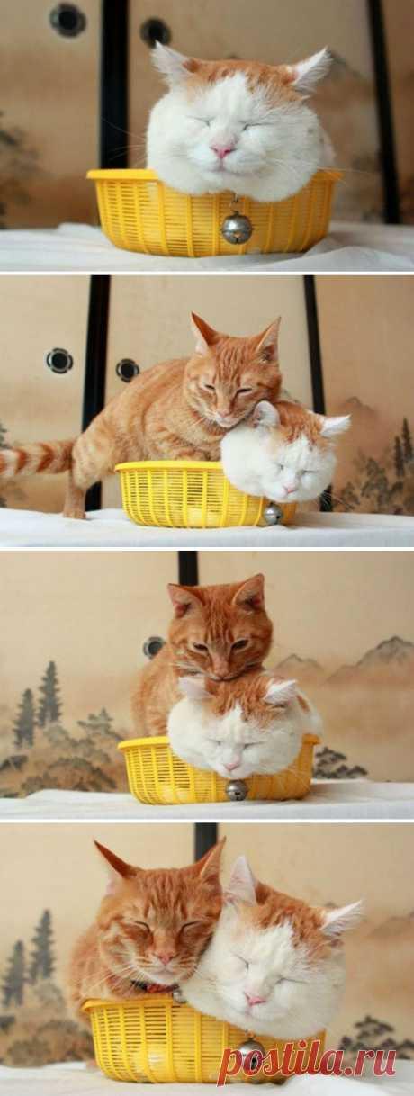 Кошки в коробочках и не только: 35 уморительных фото!