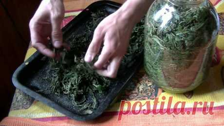4 способа ферментации Иван-чая в домашних условиях | Chay Guru | Яндекс Дзен