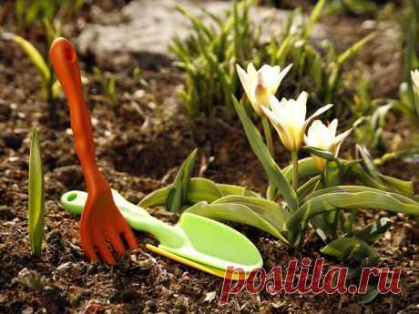 Суперфосфат и как его применять в огороде - суперфосфат, фосфор, удобрение, урожайность, подкормка, рост, почва, огород, растения