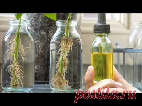 1 капля и черенки все в корнях! Мощное средство для образования корней! Стимулятор роста растений