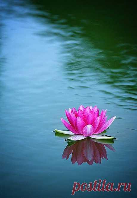 Лотос - символ гармонии и чистоты